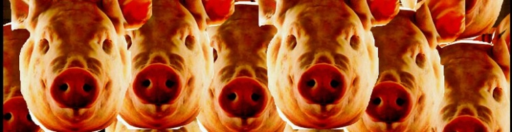 Pigs Header-1